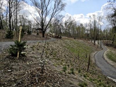 """Informace k realizaci akce """"Zeleň v areálu bývalého koupaliště v Radvanicích"""""""